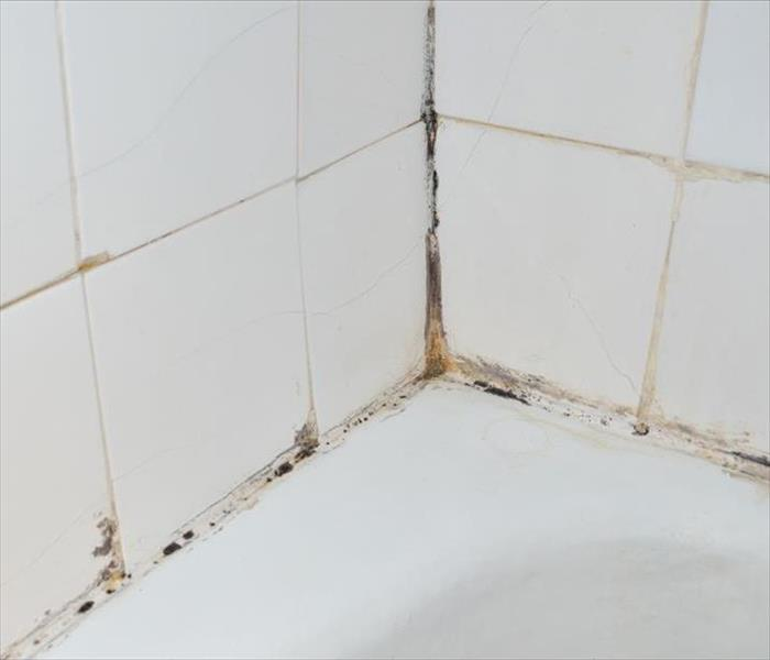 Mold in Hickory Tub