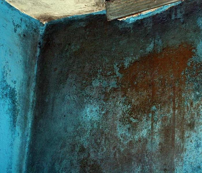 Mold Remediation Why You Should Seek Professional Mold Remediation Services