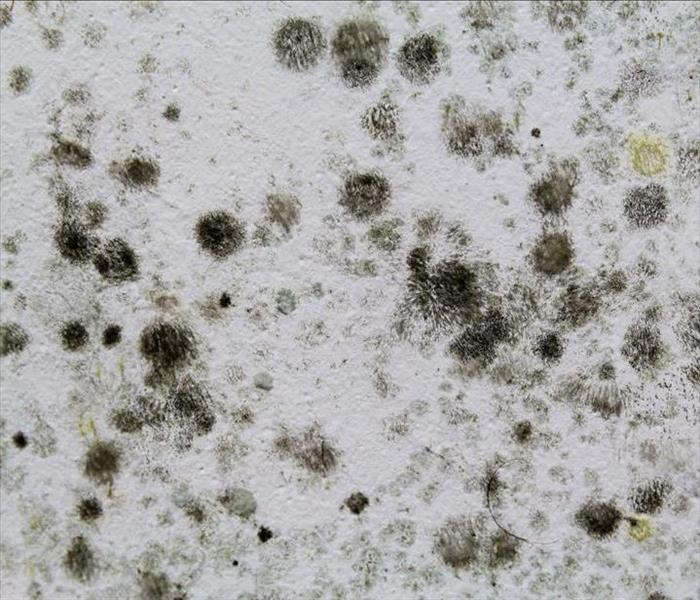 Key Indicators That Hint At Black Mold Growth