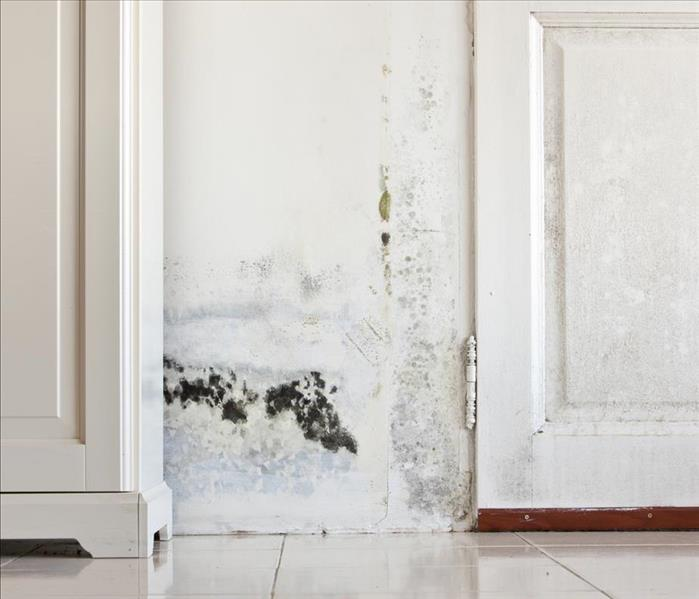 Mold Remediation Recover From Mold Damage Affecting Your Sweetwater Home