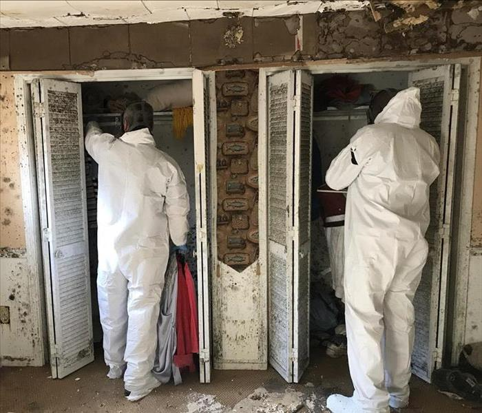 Mold Remediation 3 Things to Do if You Have Mold Growth